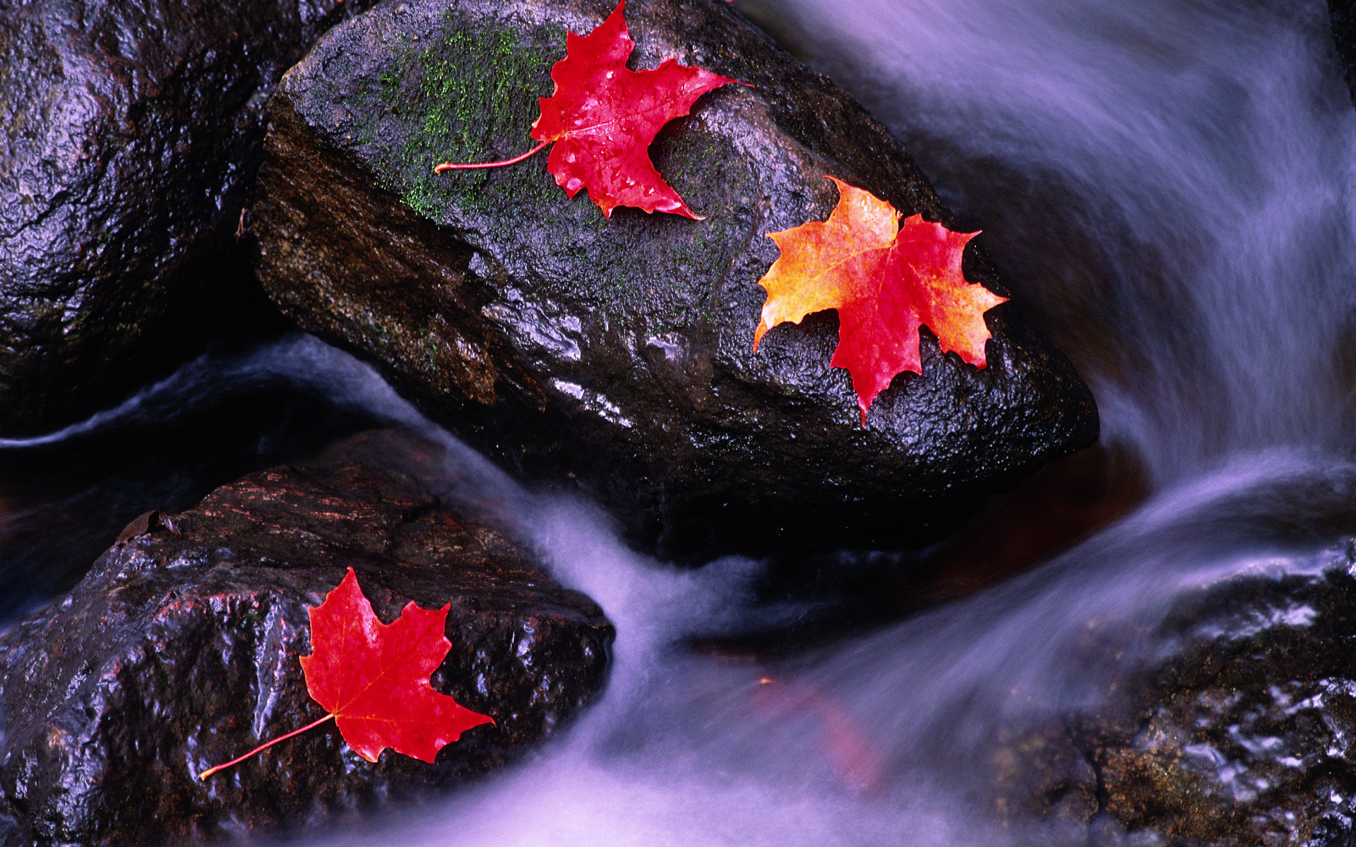 Rivers of Canada wallpapers and images   wallpapers pictures photos 1920x1200
