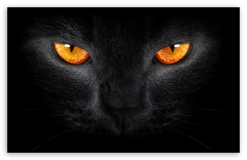 Black Cat HD wallpaper for Wide 1610 53 Widescreen WHXGA WQXGA WUXGA 510x330