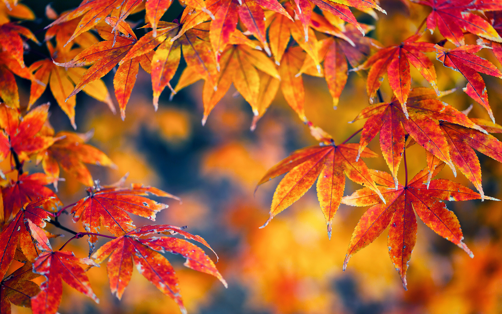Fall Foliage Backgrounds Download 1920x1200