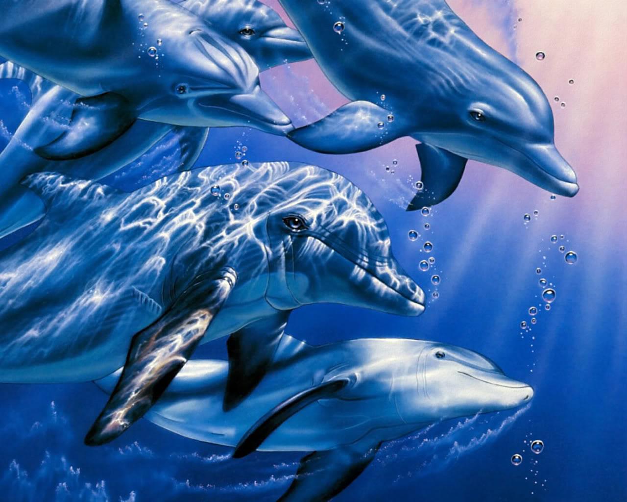 Backgrounds Dolphins Dolphins Dolphins Backgrounds Dolphin 1280x1024
