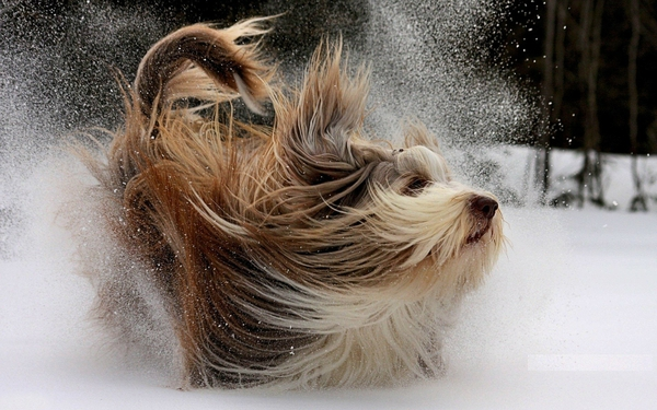 winter,snow winter snow animals dogs 1920x1200 wallpaper – Dogs ...