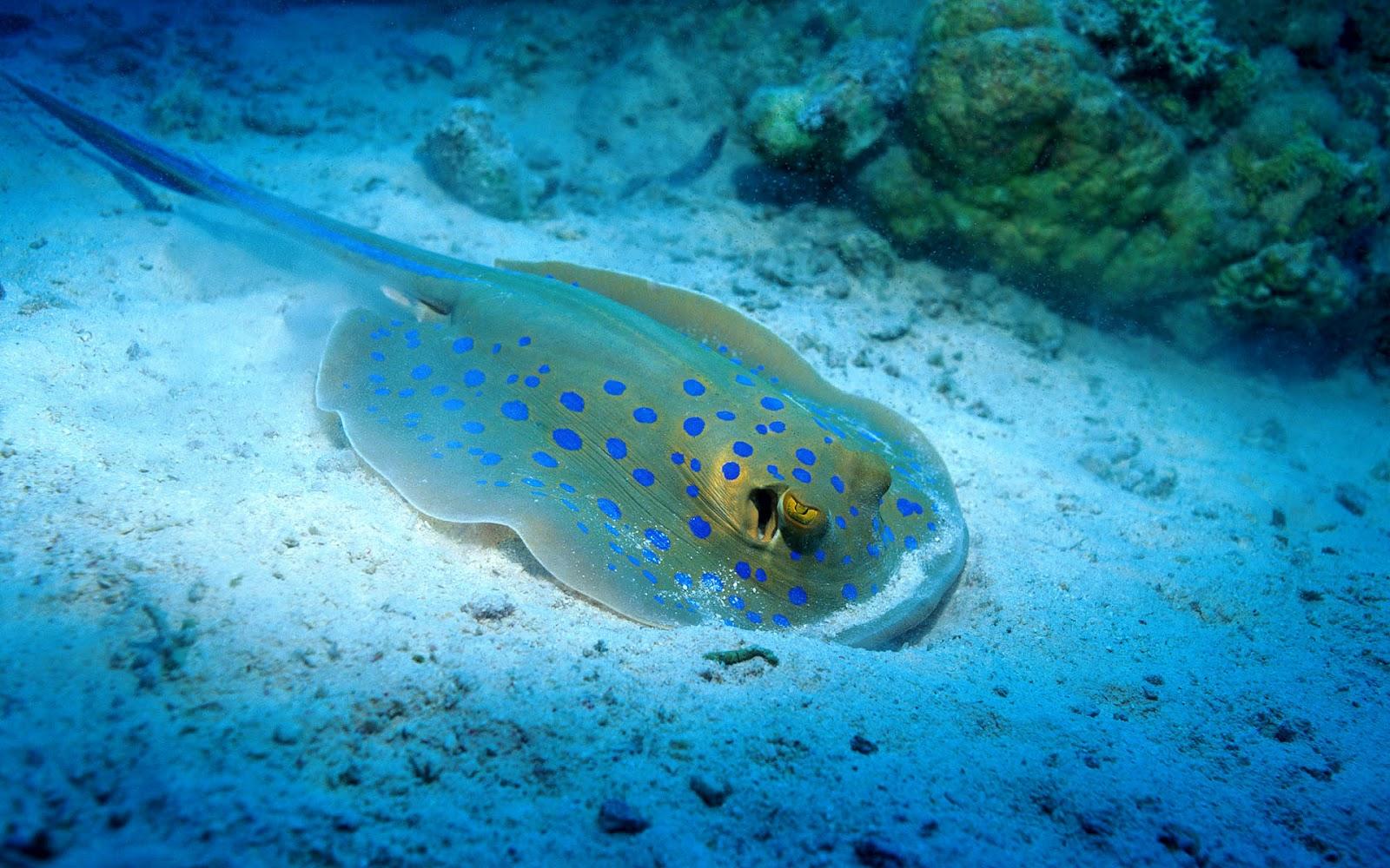 Underwater Creatures Wallpapers For Kids