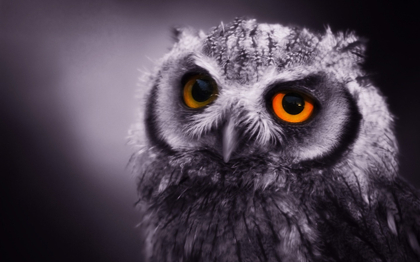 Sad Owl Wallpaper photo and wallpaper All Sad Owl Wallpaper pictures 1440x900