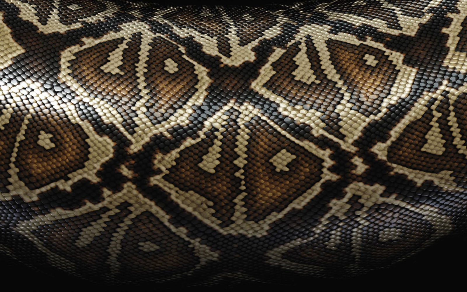 Black Snake Skin Wallpaper 1600x1000