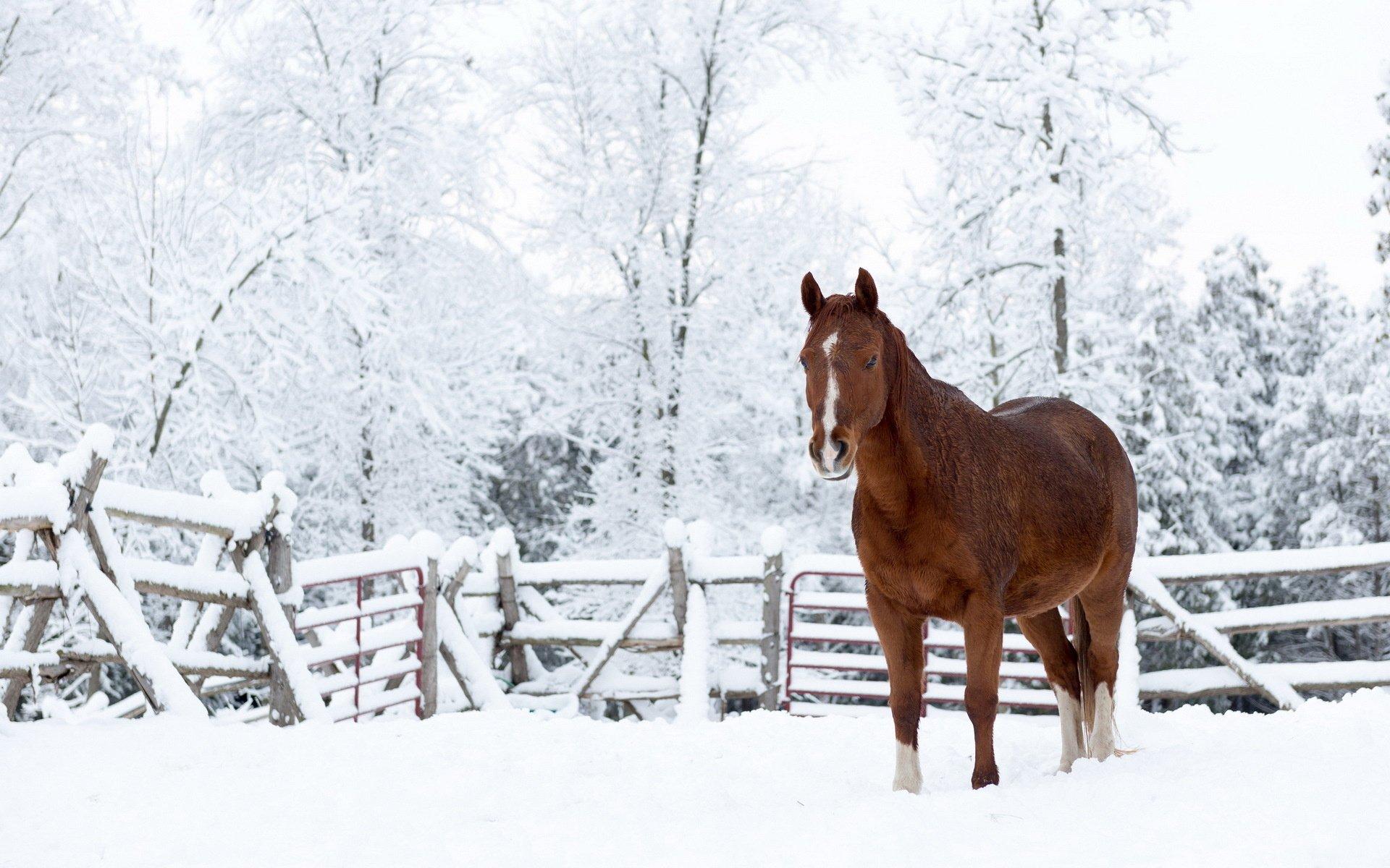 Snow horse nature winter wallpaper 1920x1200 360297 WallpaperUP 1920x1200