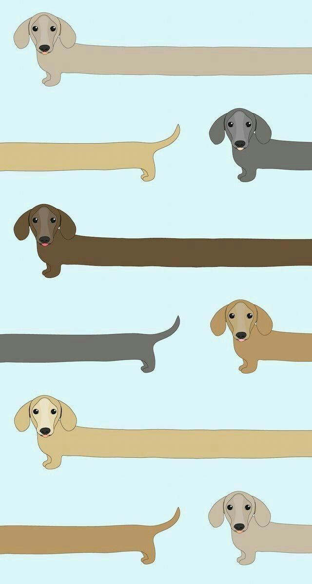 Dachshund Weiner dogs Cute wallpapers Locked wallpaper Dog 640x1199