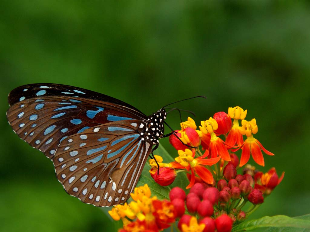 Beautyfulnaturewallpaper naturescenery abutterflyperchedona 1024x768