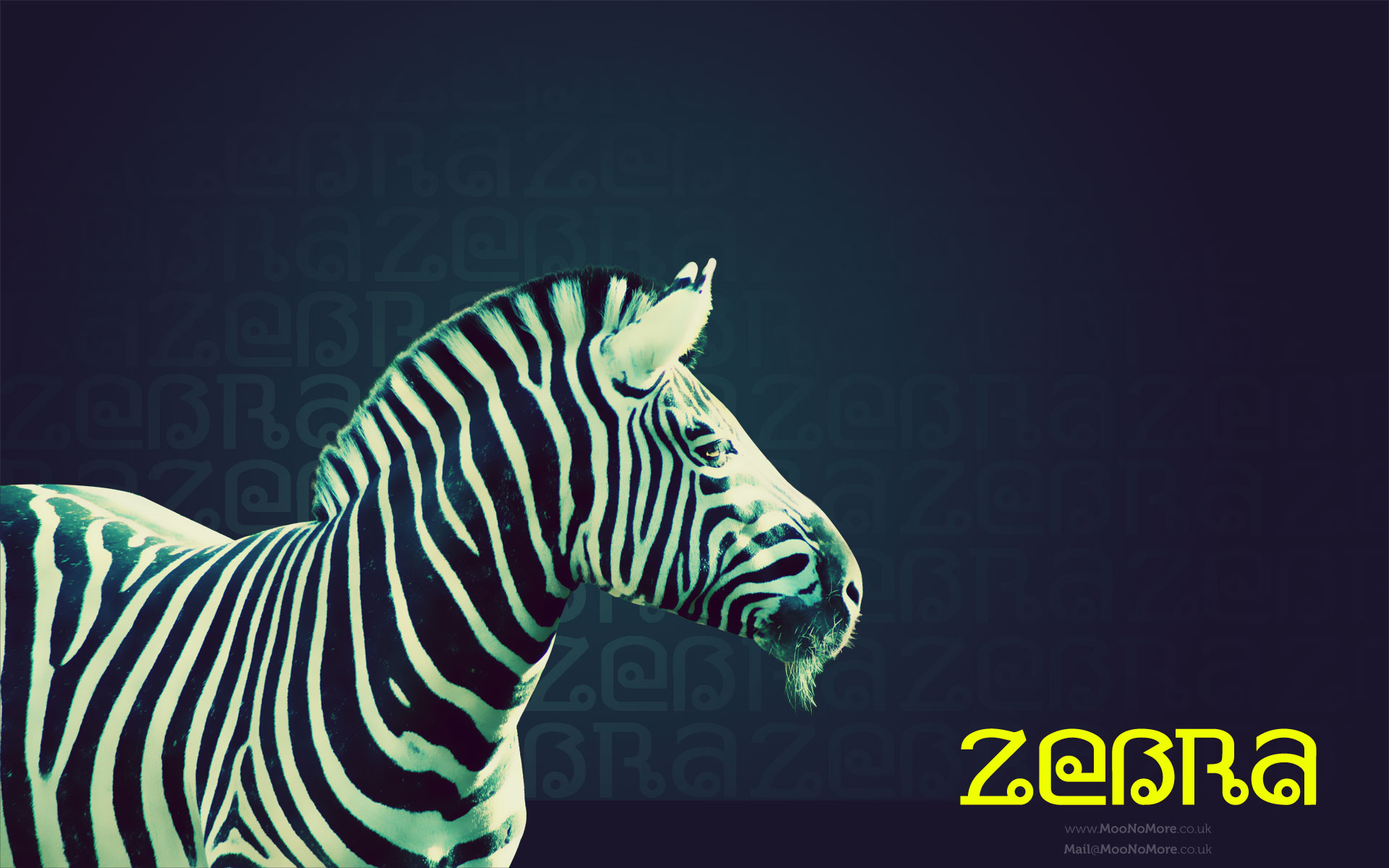 Blue Zebra Hearts Background Images Pictures   Becuo 1920x1200