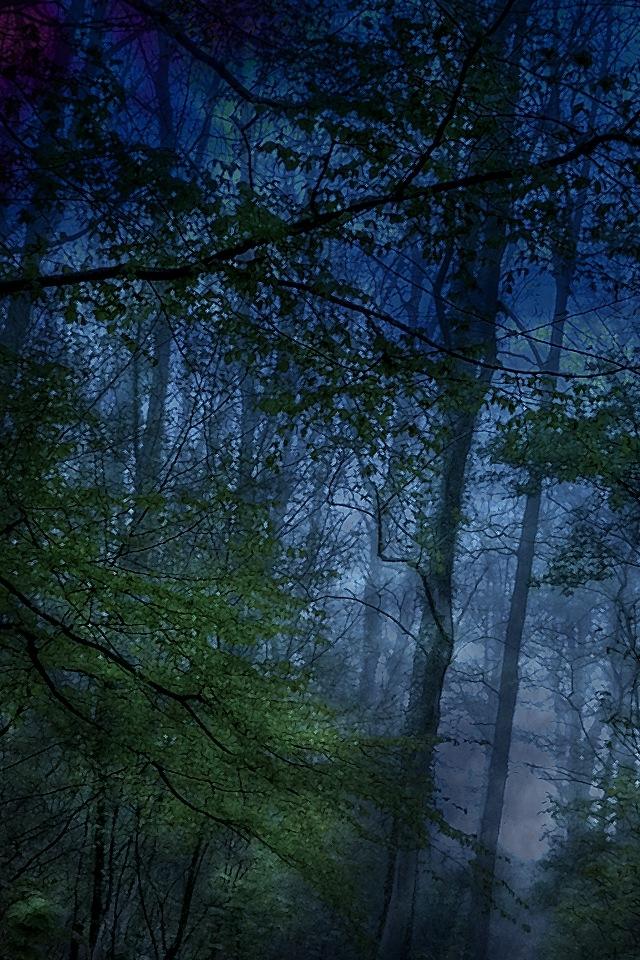 48 Dark Forest Iphone Wallpaper On Wallpapersafari
