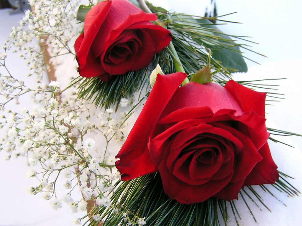 Wallpaper download dil - Wallpaper Download Full Screen Red Roses Love Wallpapers And Backgrounds Seen On Www Dil Ki