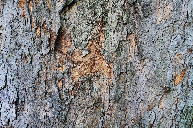 40+ Textured Tree Bark Wallpaper on WallpaperSafari