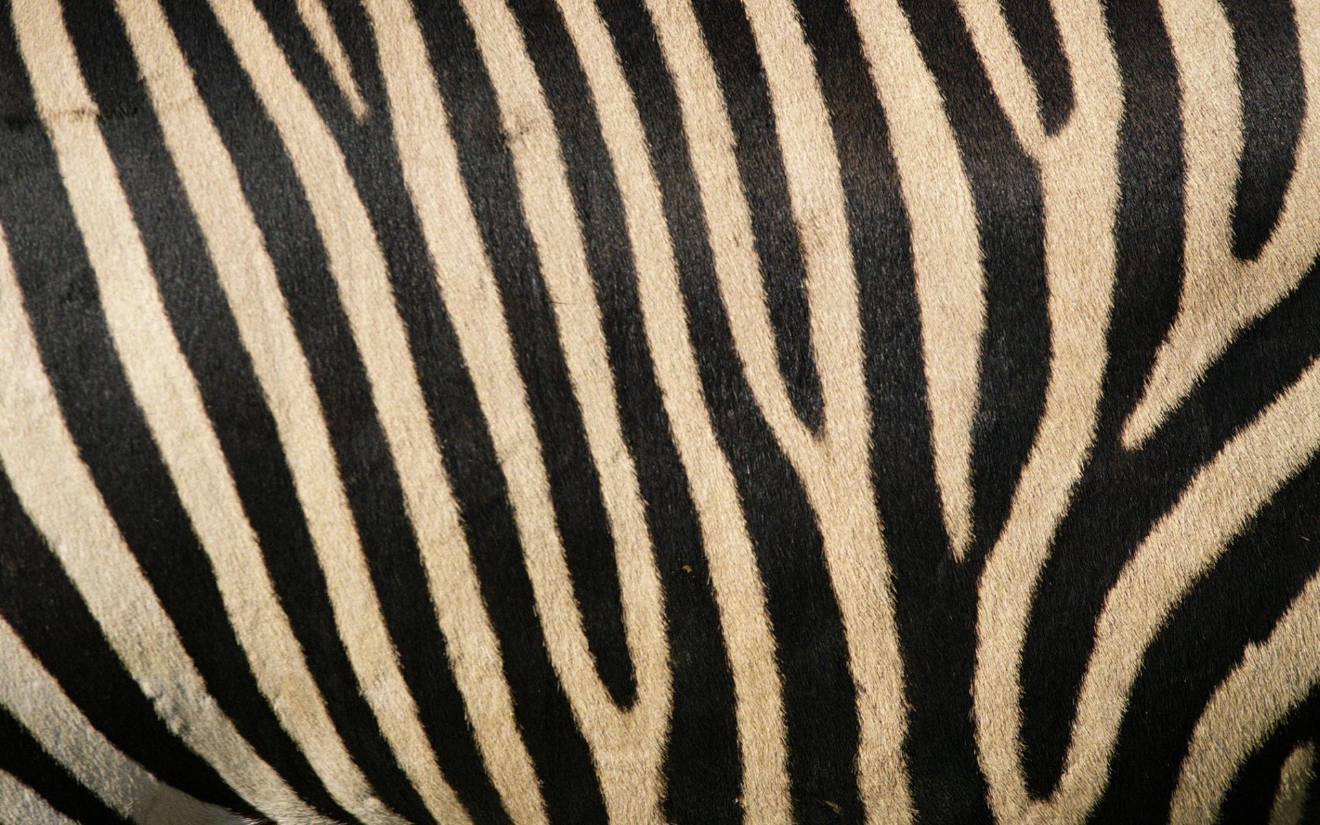 1920x1200 Zebra stripes desktop PC and Mac wallpaper 1920x1200