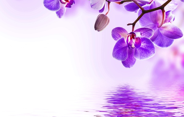 Orchid purple water reflection flowers beautiful orchid flowers 596x380
