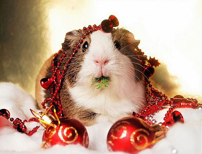 Christmas Animals Cute Funny New Images Funny And Cute Animals 700x533