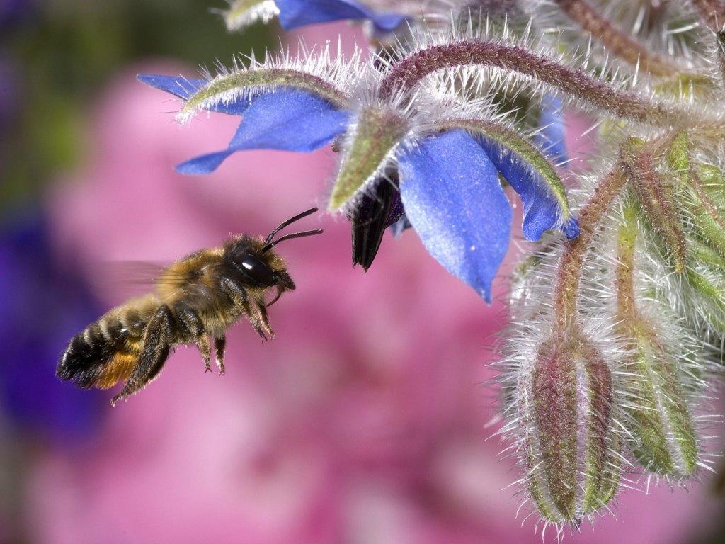 Bee wallpaper   Splendid Wallpaper HD 1024x768