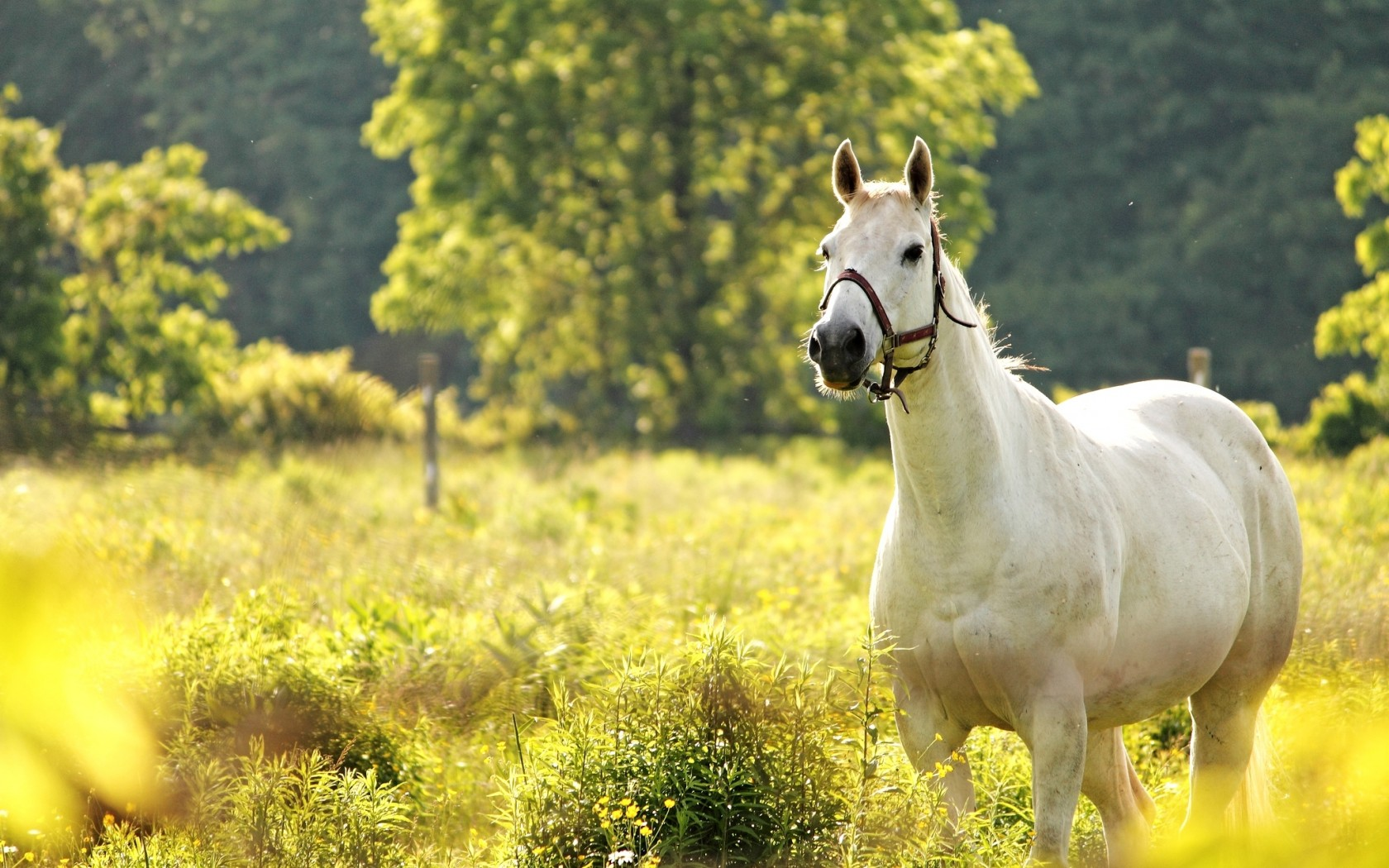 Spring Horse Wallpaper Images - Reverse Search