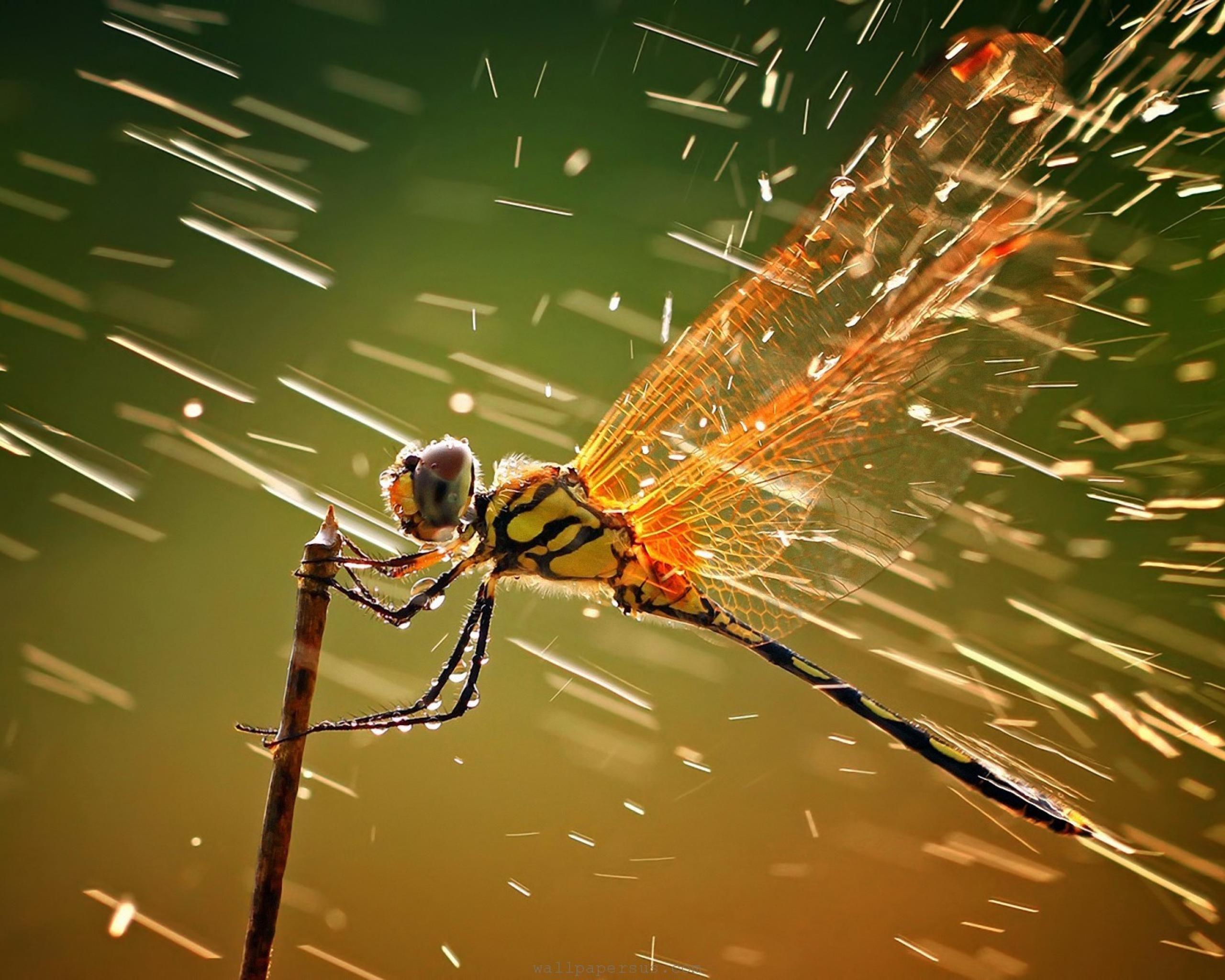 Dragonfly Desktop Wallpapers FREE on Latorocom 2560x2048
