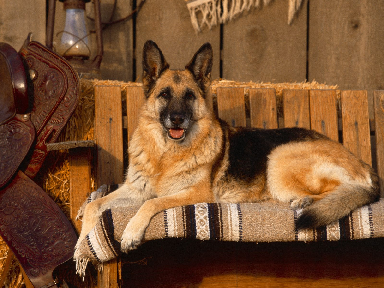 German Shepherd HD Wallpapers German Shepherd Wallpapers German 1600x1200
