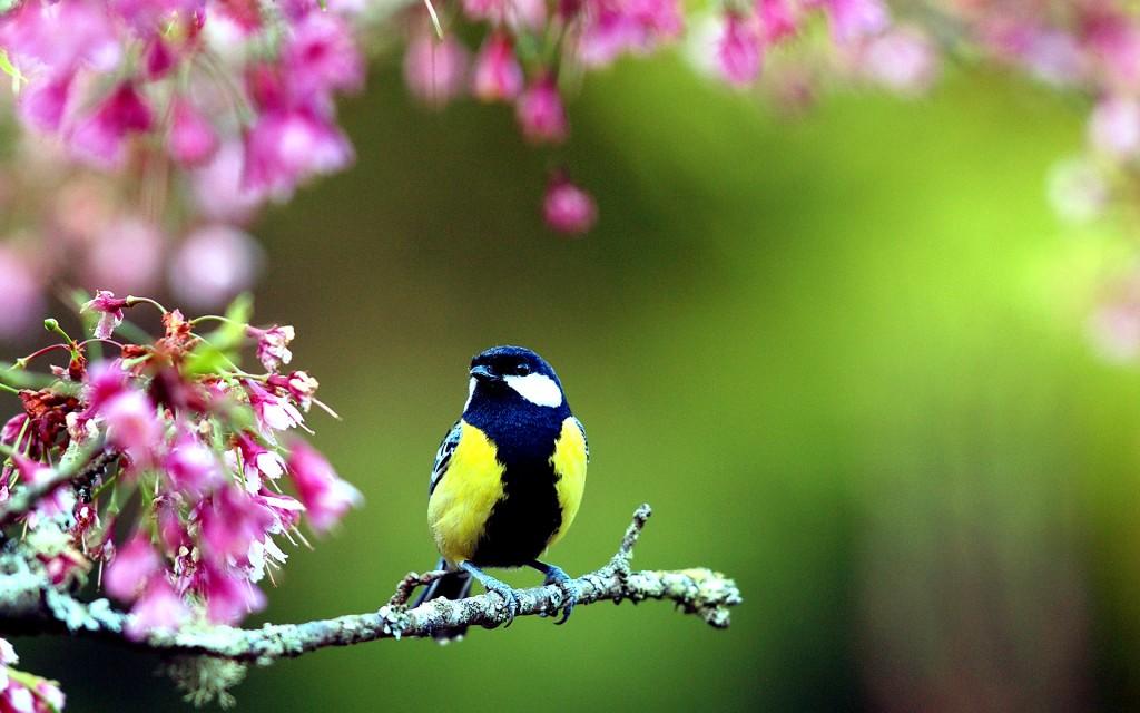 spring birds and flowers wallpaper wallpapersafari