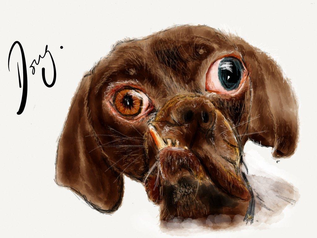 Ugly Dog Wallpaper Wallpapersafari