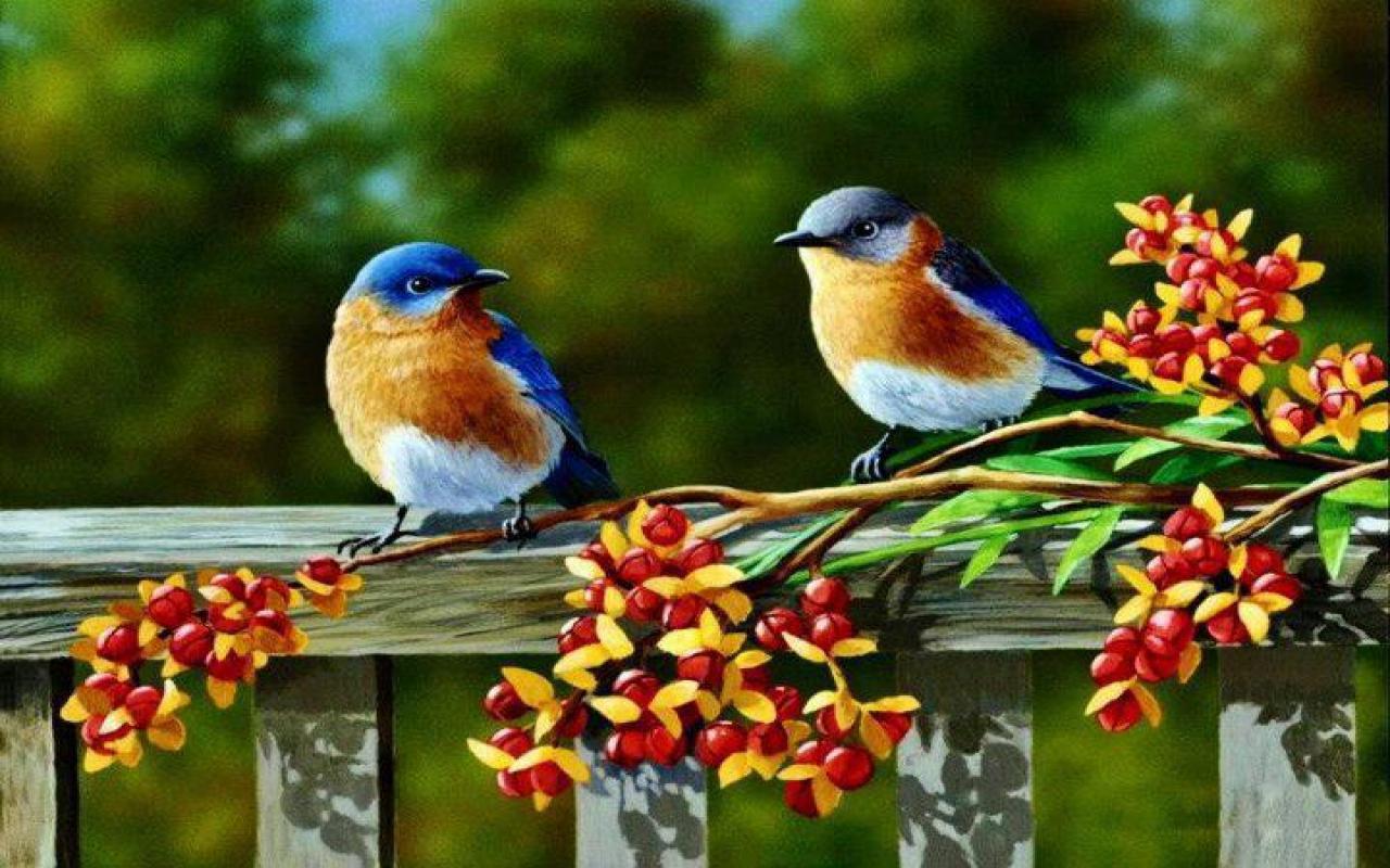 BLUE BIRD WALLPAPER   90384   HD Wallpapers   [WallpapersInHQcom] 1280x800
