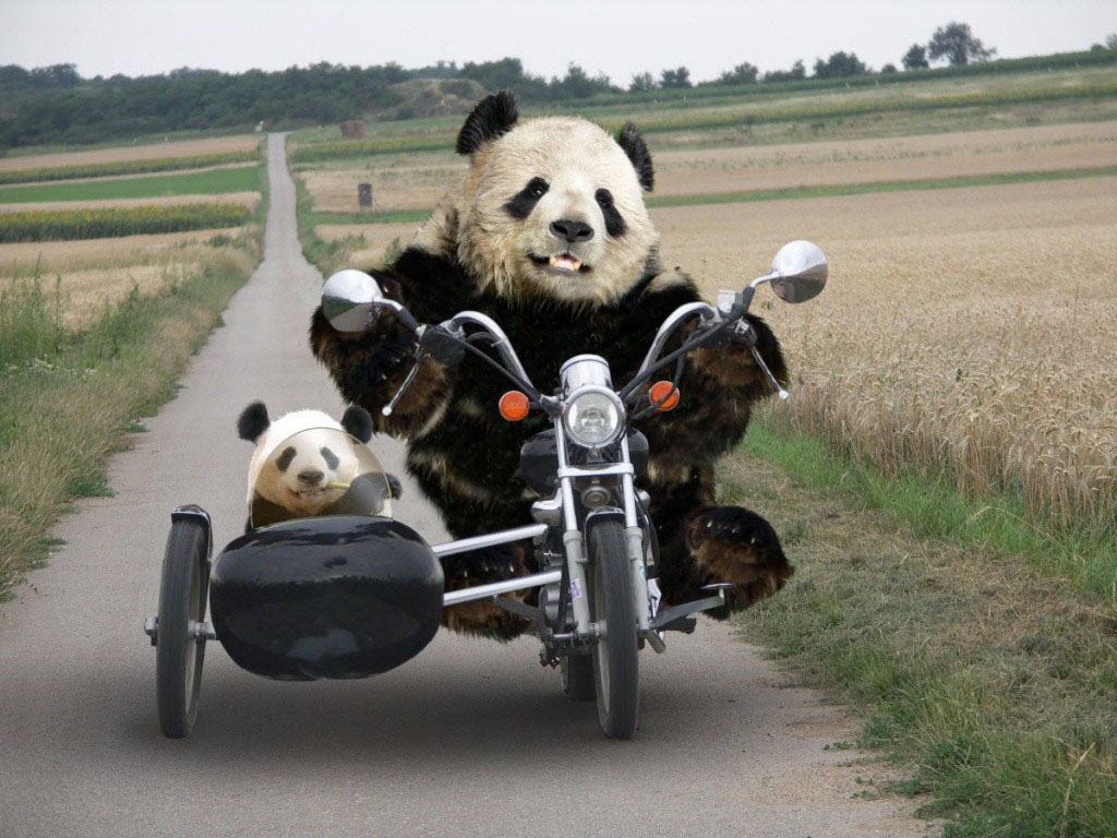 Tag Funny Panda Wallpapers Backgrounds Photos Images andPictures 1024x768