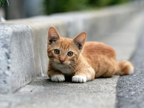Free Cat Wallpapers And Screensavers Wallpapersafari