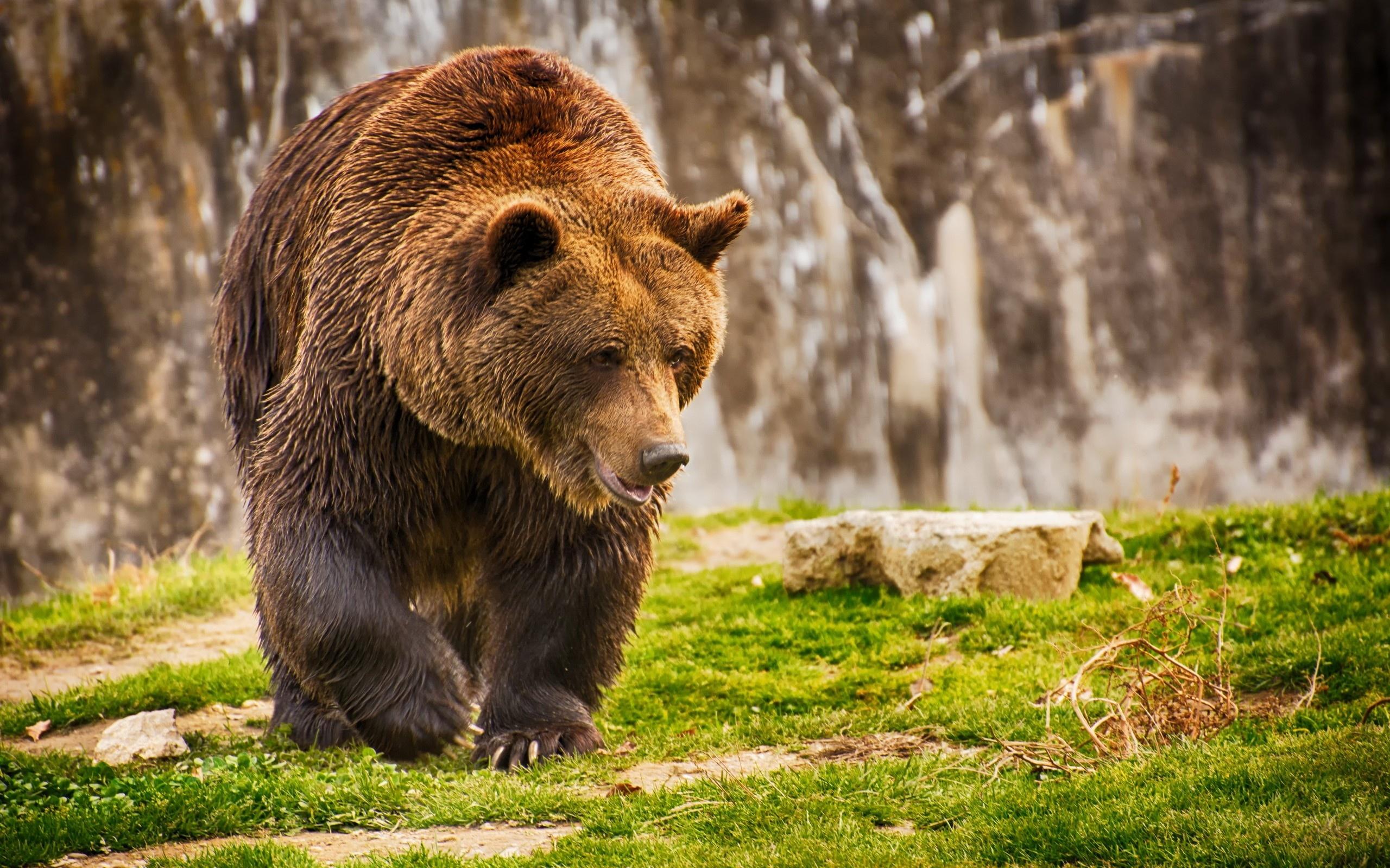 bears (received pronunciation) ipa(key): /bɛə(ɹ)/, /bɛː(ɹ)/, enpr: bâr (general american) ipa(key): /bɛəɹ/, enpr: bâr homophone: bare rhymes: -ɛə(ɹ) (southern us, colloquial) ipa(key): /bɑɹ/ homophone: bar (southern us, colloquial.