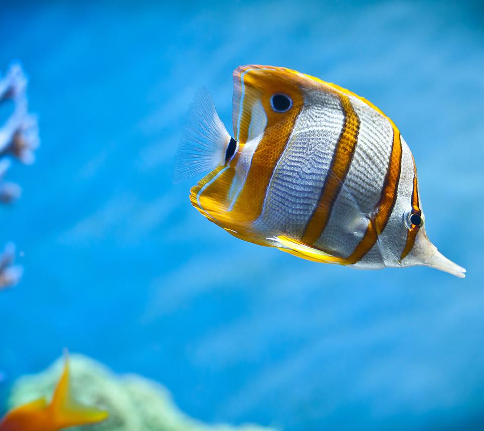 Tropical fish desktop wallpaper wallpapersafari for Plenty of fish desktop