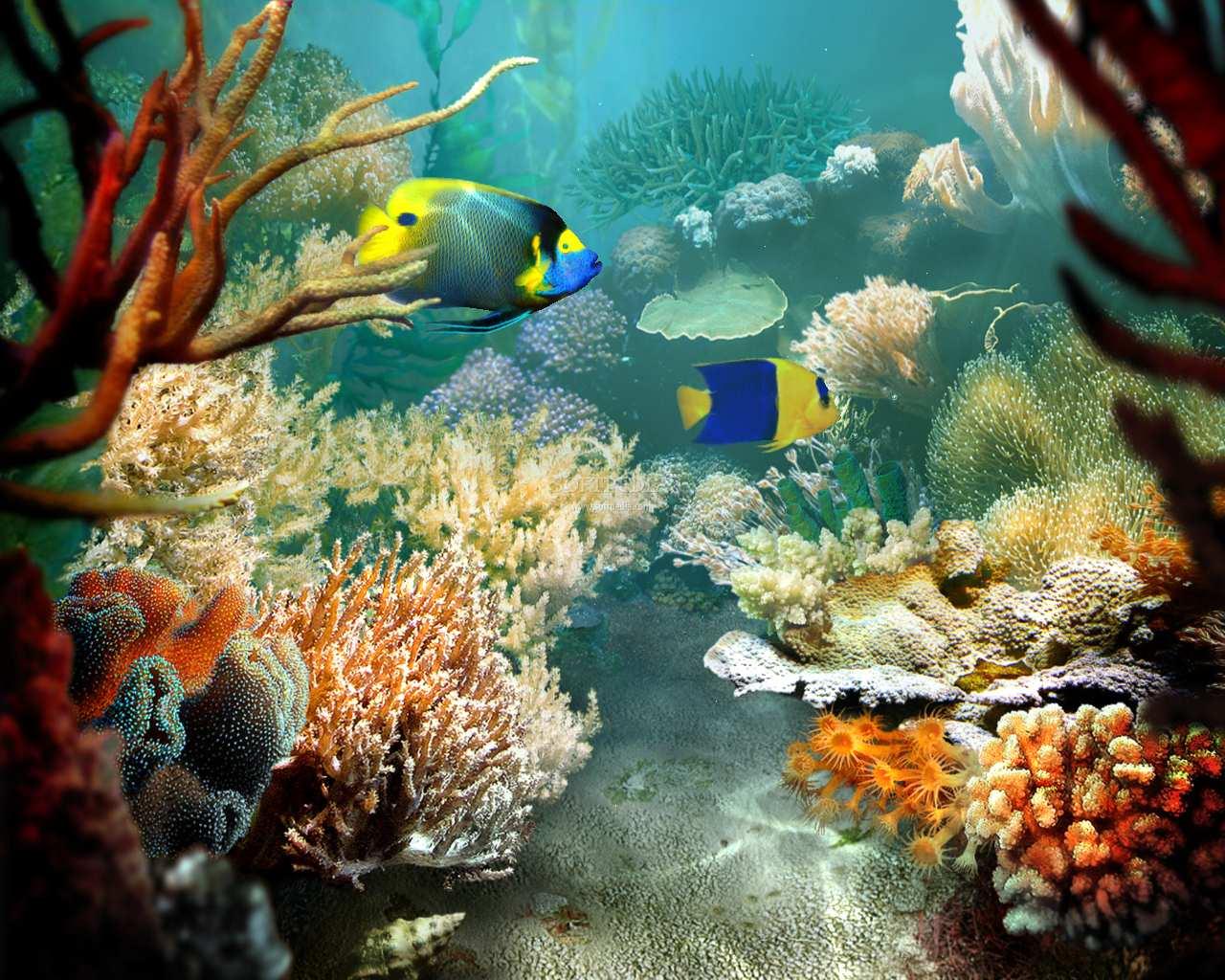 Tropical Fish Wallpapers - WallpaperSafari  Tropical Fish W...