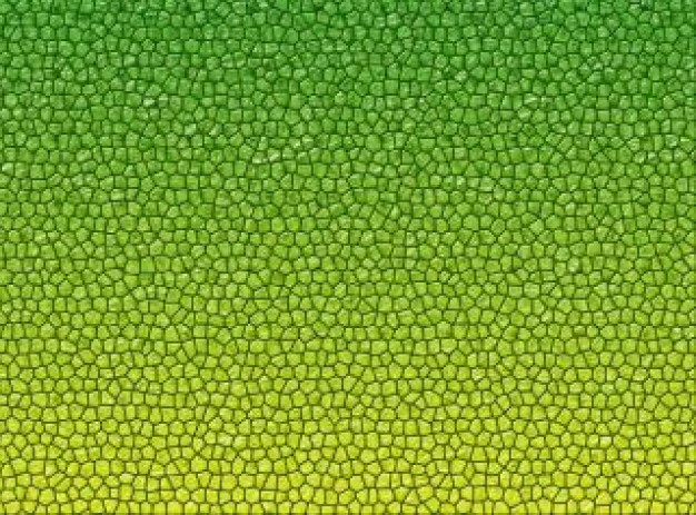reptile skin texture Photo Download 626x463