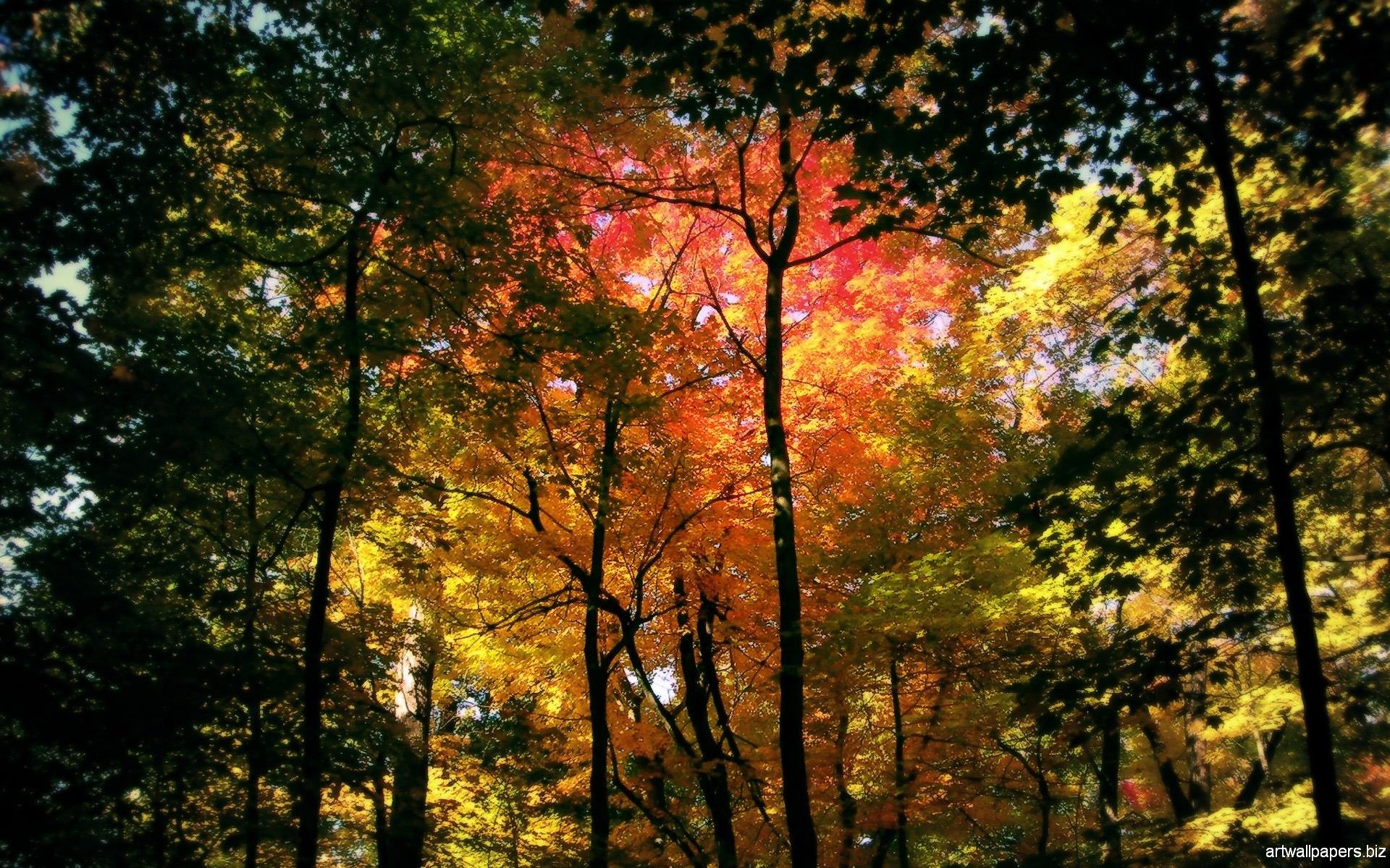 Autumn Wallpapers Autumn Widescreen Wallpapers Full HD 1080p 1920x1200