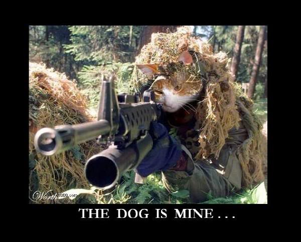 Cat Sniper Images 600x483