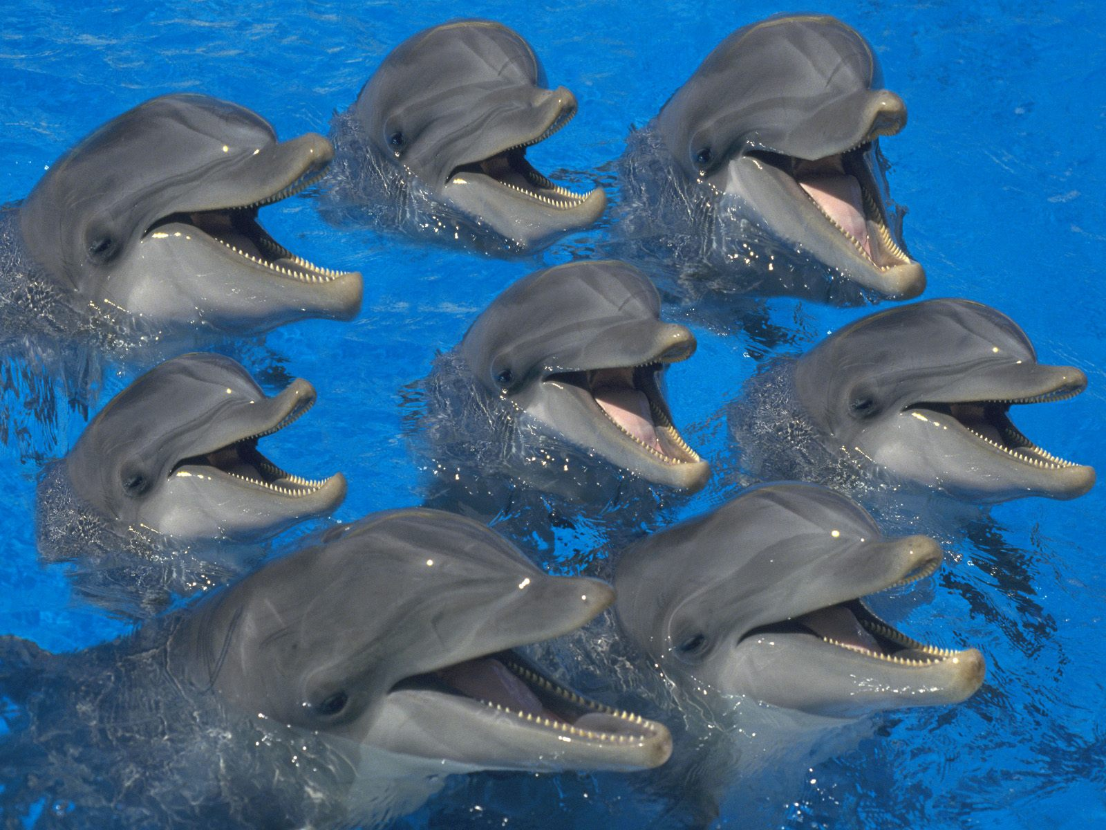 HQ Bottlenose Dolphins Wallpaper   HQ Wallpapers 1600x1200