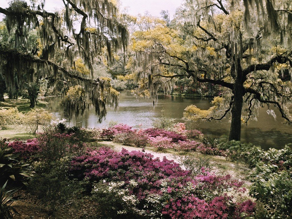 image captures the vibrant foliage at Charleston South Carolinas 990x742