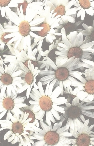 daisy flower tumblr wallpaper white   image 2196342 by Maria D on 323x500