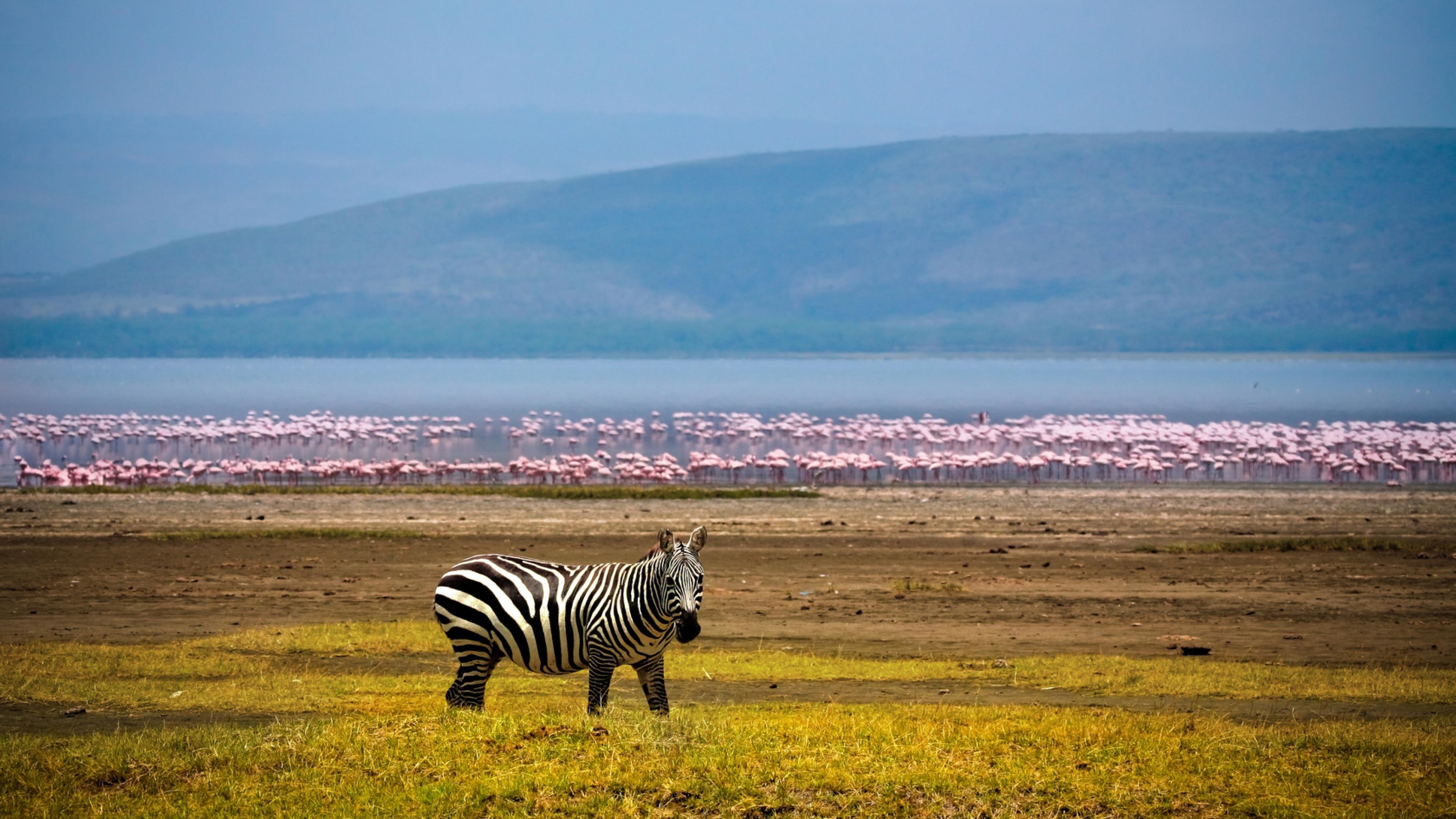 Africa Background Lake Flamingos Wallpaper Background 4K Ultra HD 3840x2160