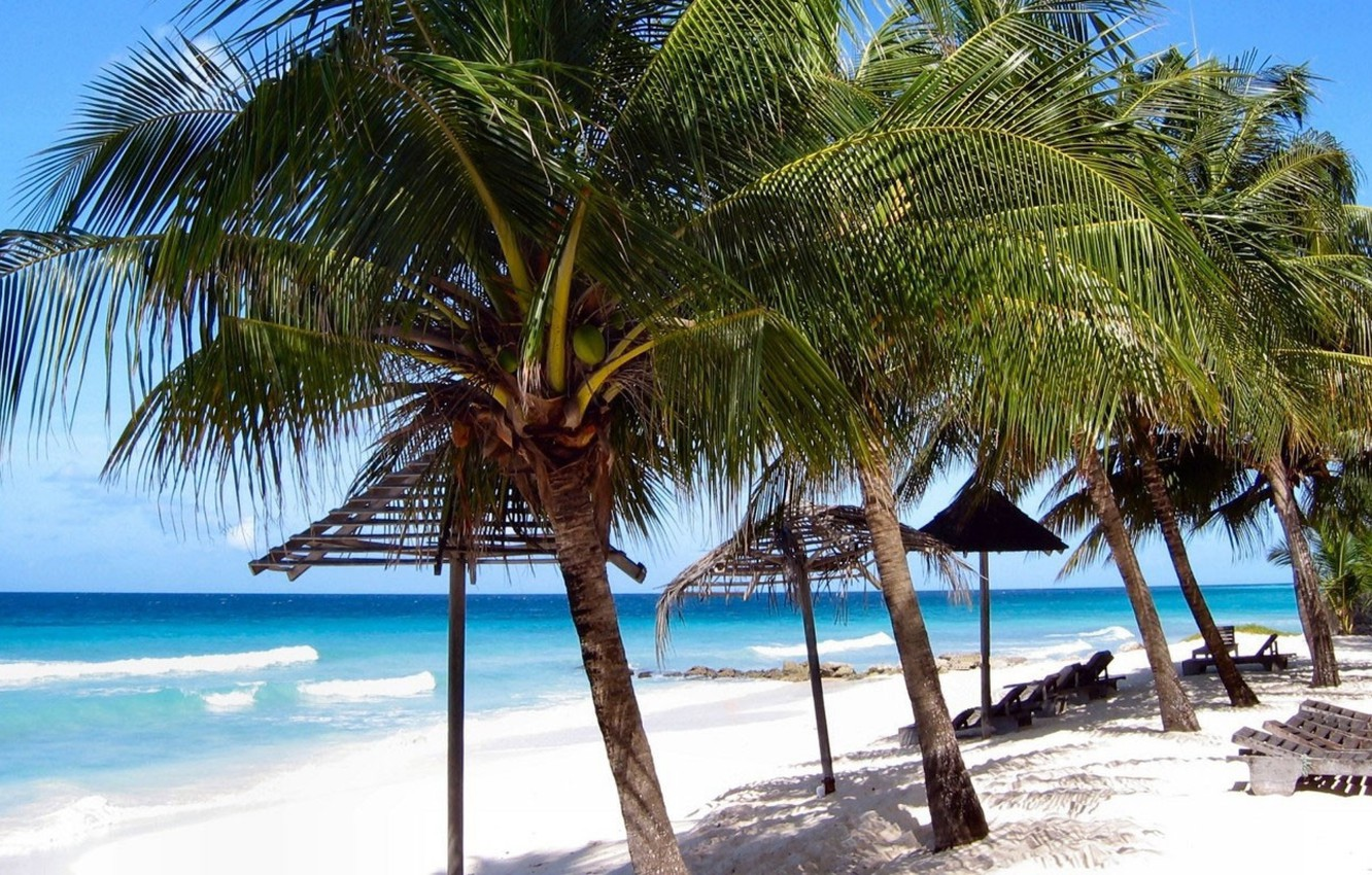 Wallpaper sand beach the sky palm trees shore Barbados images 1332x850