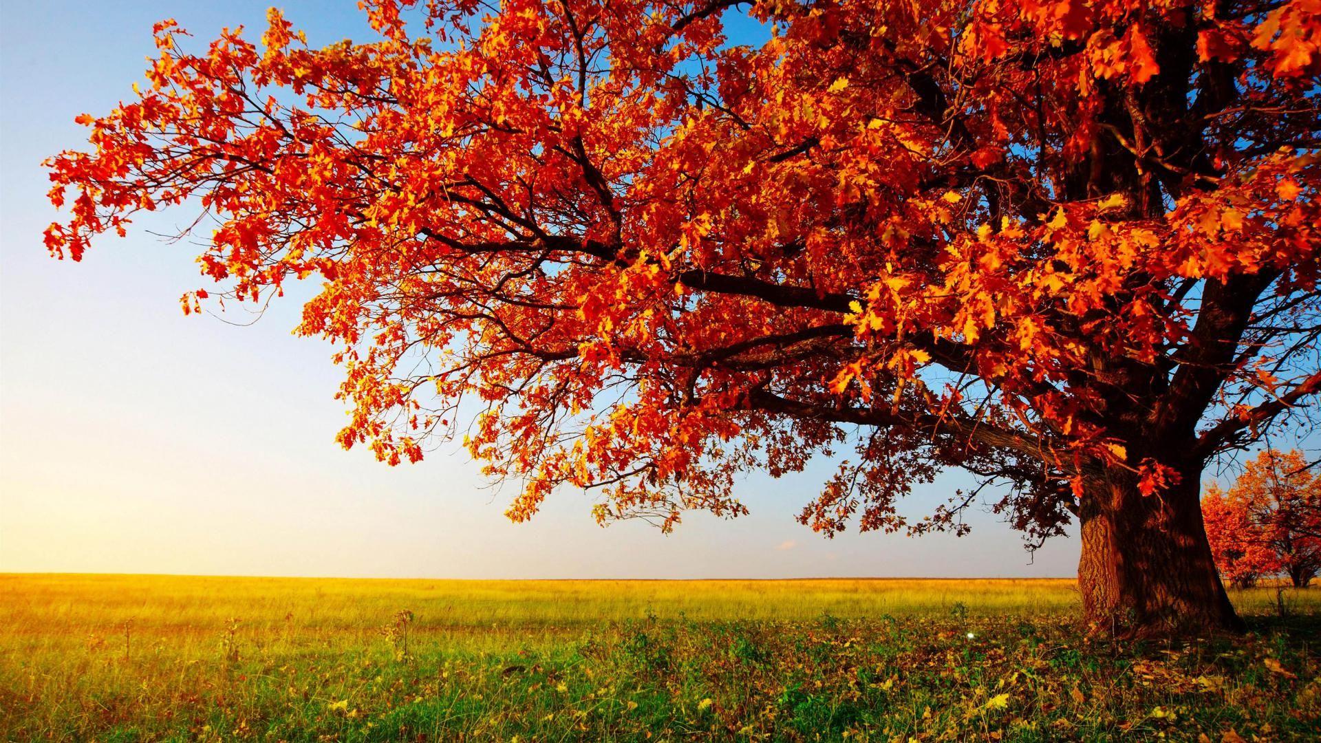 High Resolution Nature Desktop HD Wallpaper Widescreen 1920x1080