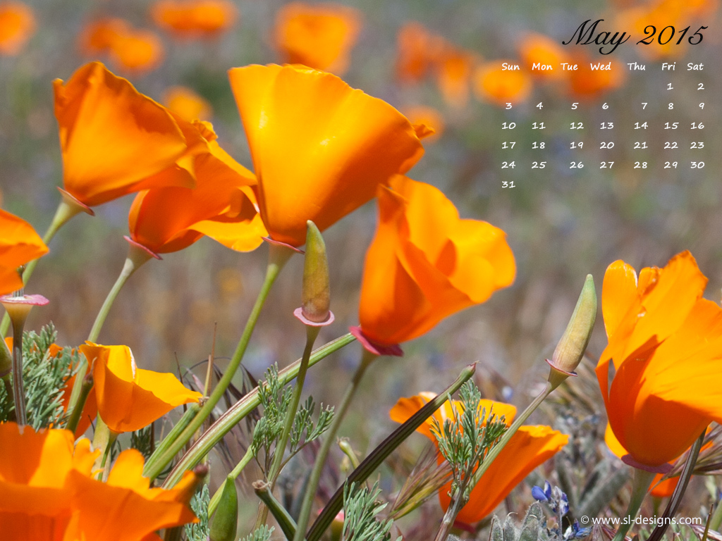 Download May calendar wallpaper for your desktop web site email or 1024x768