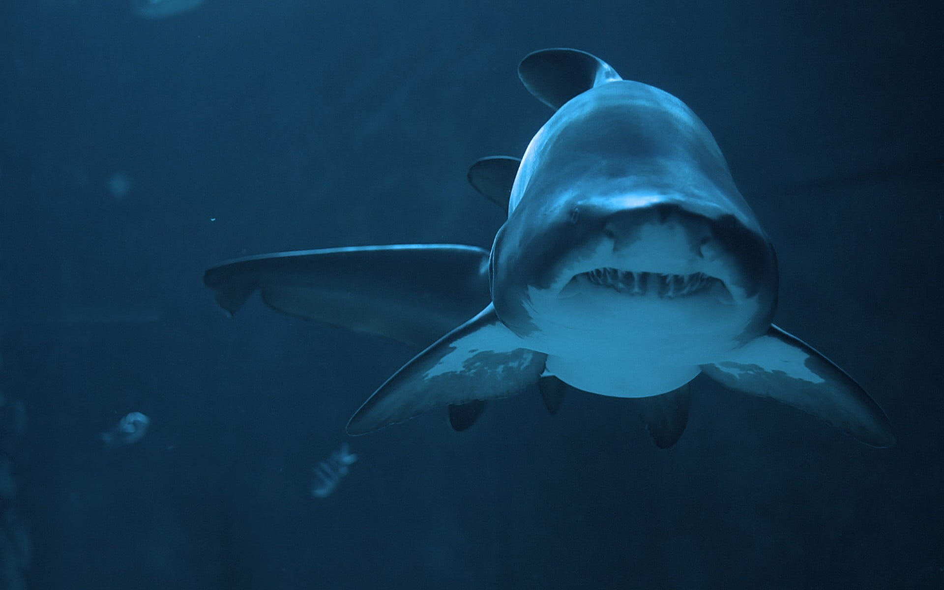 White and black fish decor shark animals HD wallpaper 1920x1200