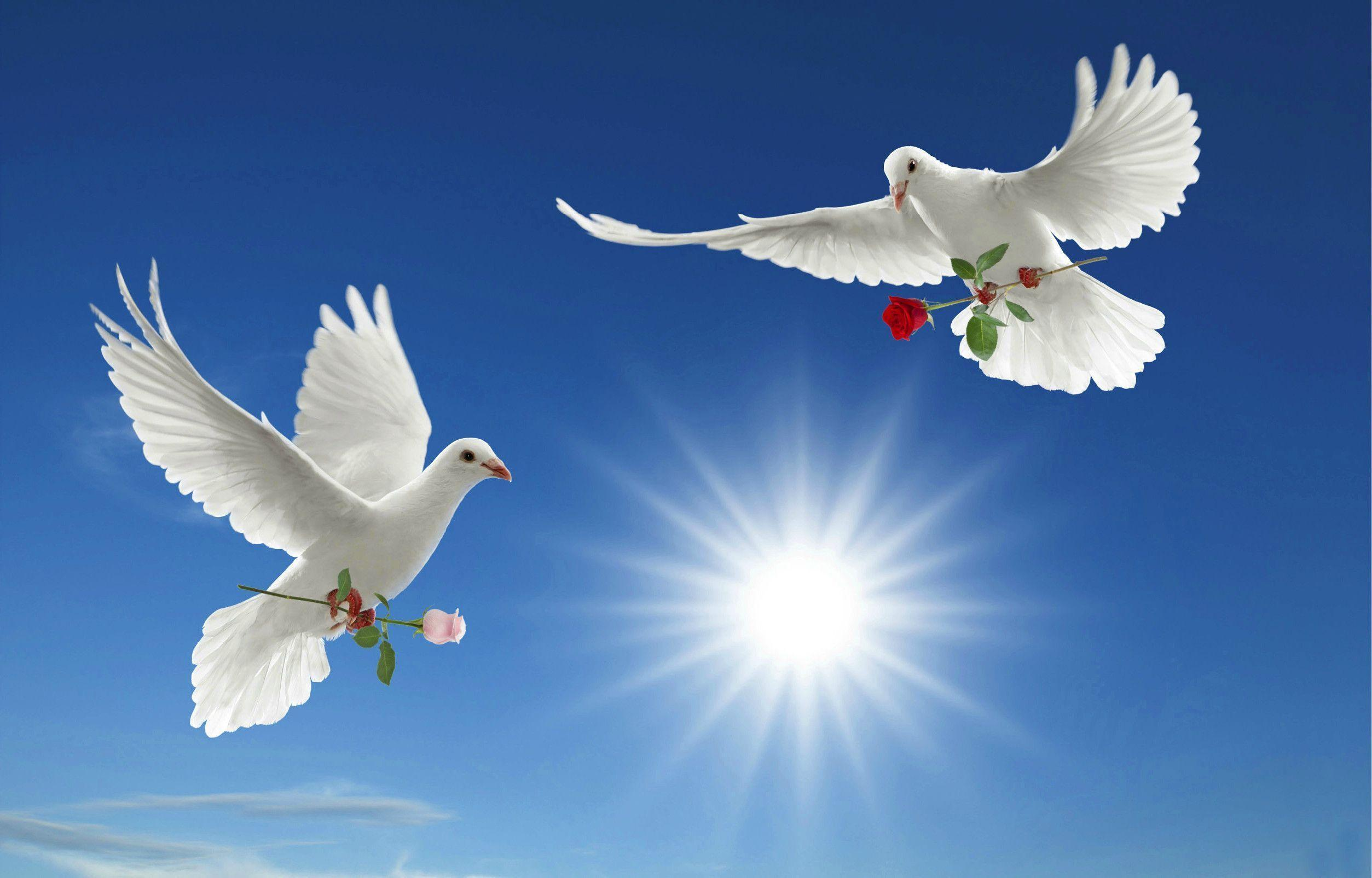 World Peace Wallpapers 2507x1605