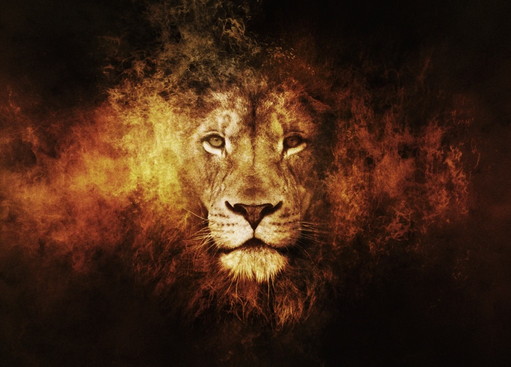 Lions New HD Wallpapers 2013 2014 1021x734