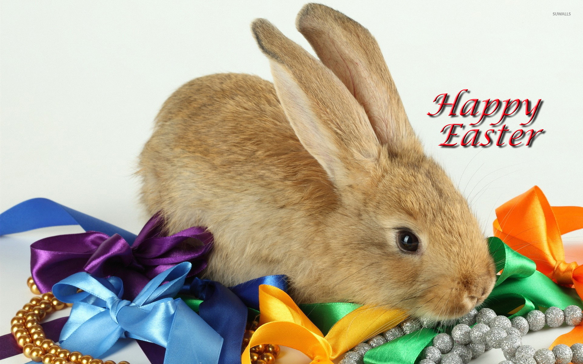 Free Download Easter Bunny Wallpaper Holiday Wallpapers 11991