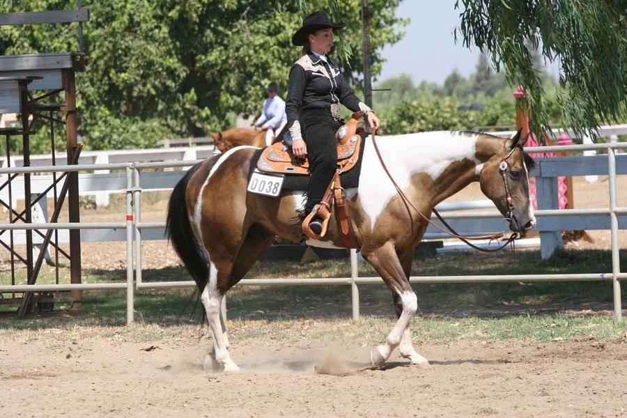 Buckskin Paint Horse Gelding Western by HorseStockPhotos on 900x600
