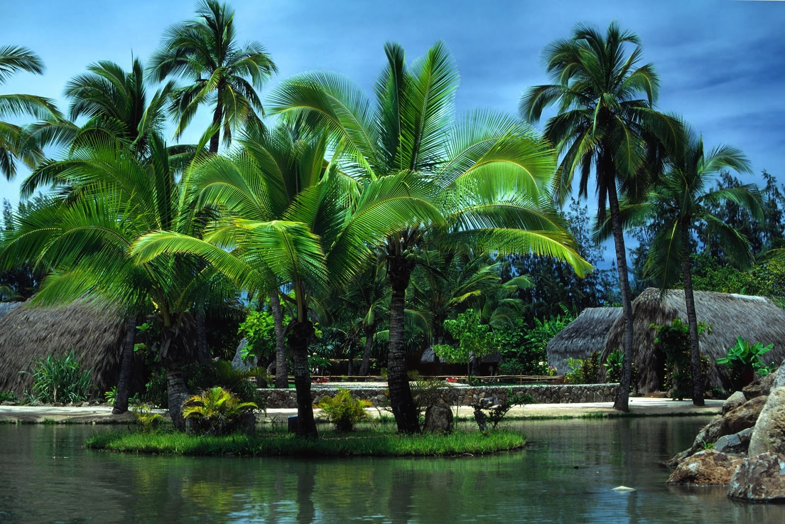 palm tree wallpapers hd HD Pictures Wallpapers 1600x1067