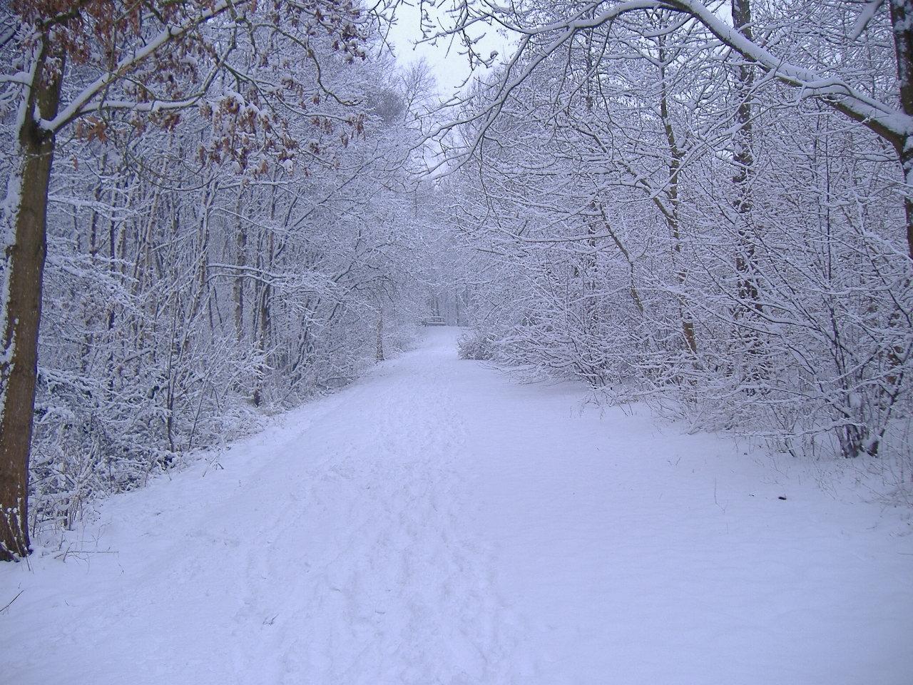 Winter scene wallpaper 27