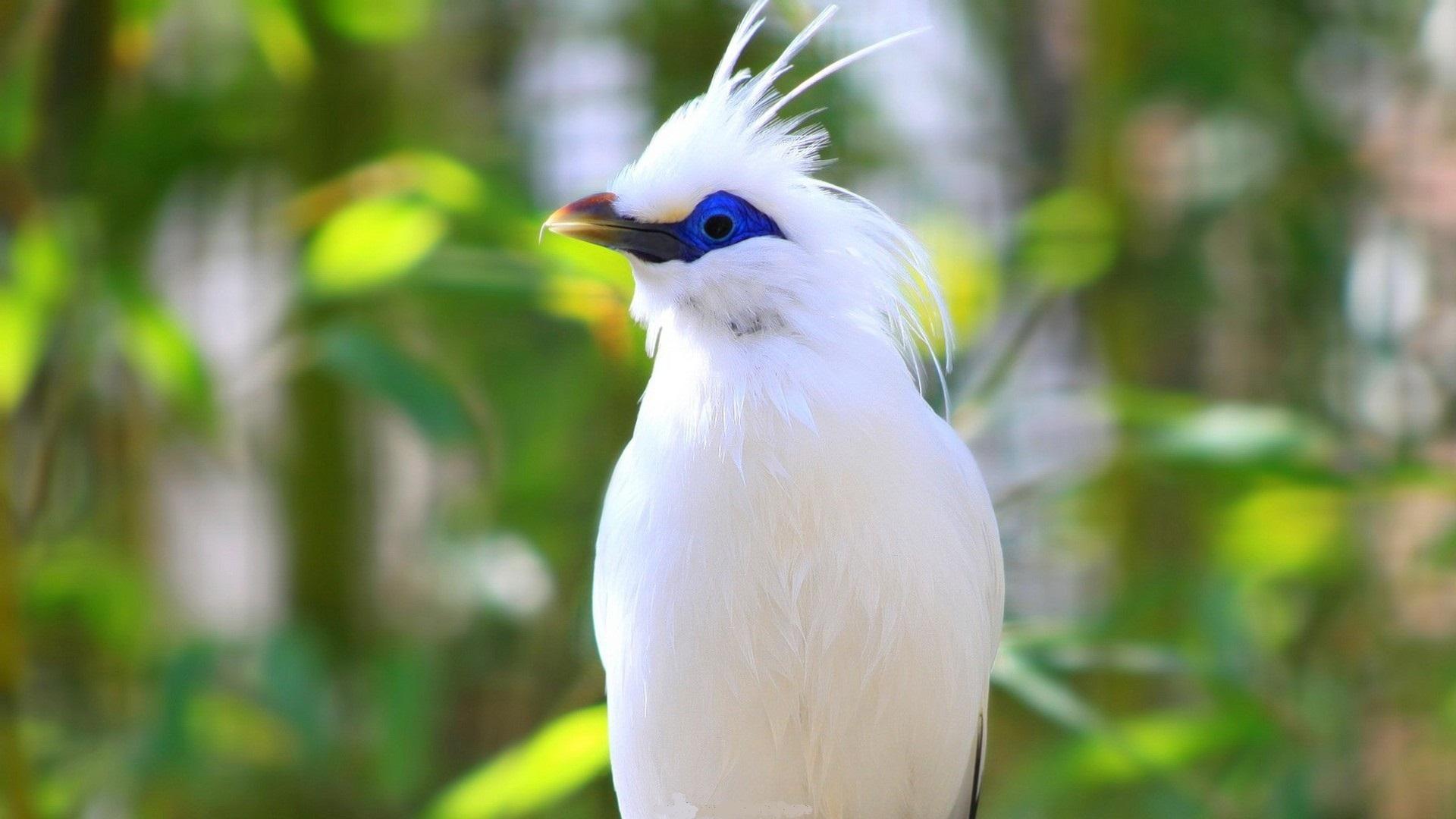 Wallpapers birds amazing bird   1485403 1920x1080