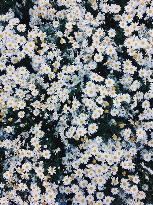 Flowers on We Heart It 500x667