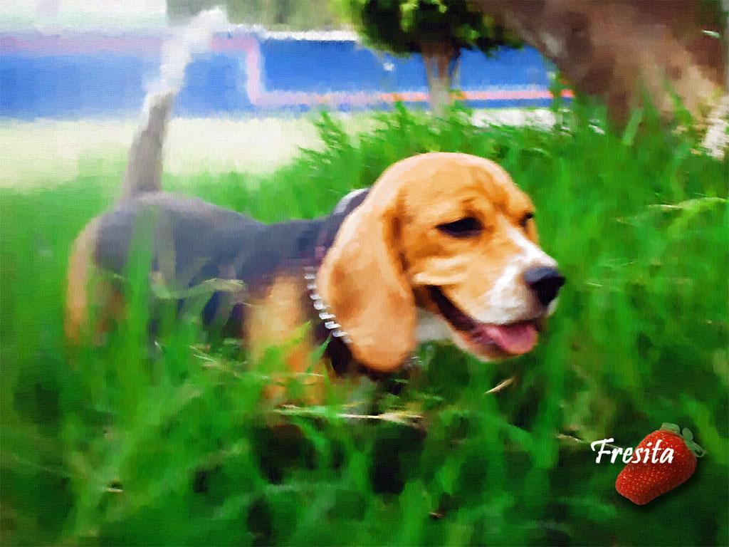 Beagle Wallpaper Screensavers Wallpapersafari